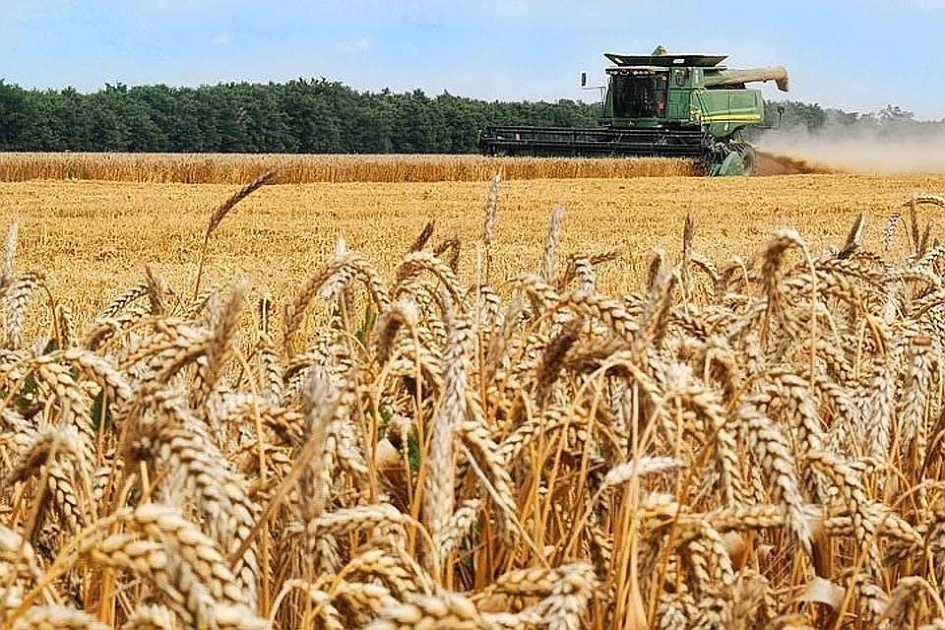 Вінницькі аграрії зібрали більше 2,4 мільйонів тонн зерна