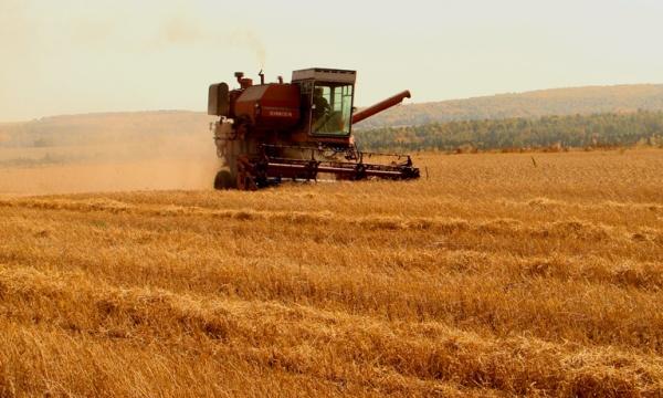 У Хмільницькому районі зібрали 470 272, 4 центнери зернових та зернобобових культур