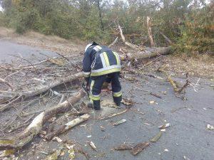 Хмільницькі рятувальники прибрали дерево, що впало після поривів сильного вітру