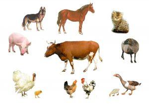 У Хмільнику розроблятимуть правила утримання домашніх тварин