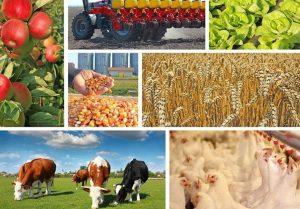 Як аграрії Хмільницького району реалізовують інвестиційні проекти