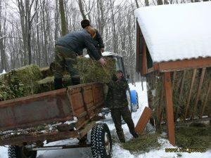 """Хмільницькі лісівники вже готують зимове """"меню"""" для зубрів та інших тварин"""