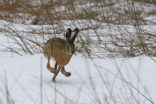 Завтра у Хмільницькому районі розпочинається сезон полювання на хутрових та копитних тварин