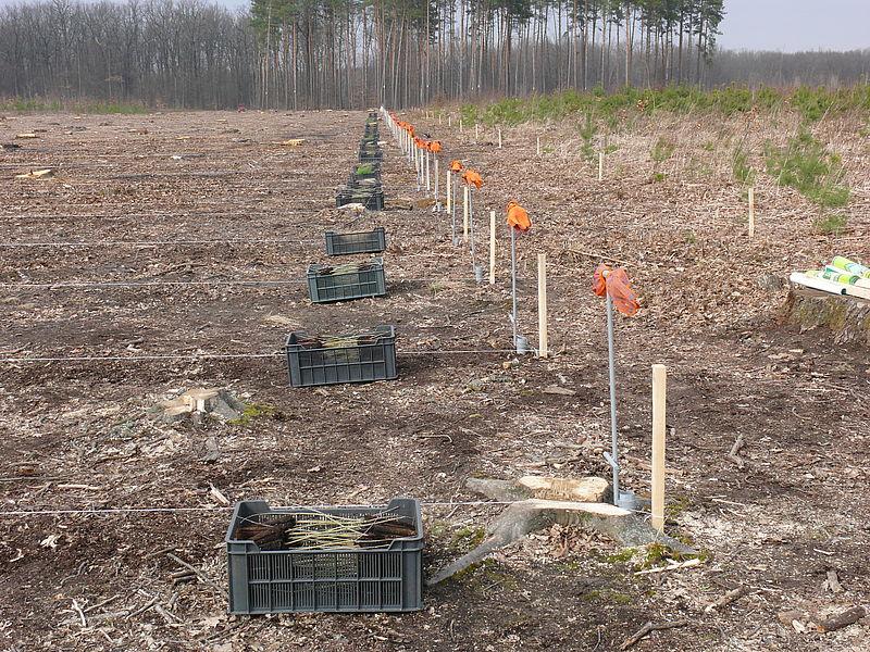 Сто гектарів нового лісу мають висадити у цьому році хмільницькі лісівники