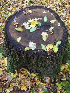 Посадовця хмільницького держлісгоспу підозрюють у незаконній вирубці дерев на понад мільйон гривень? Що кажуть правоохоронці та самі лісівники?