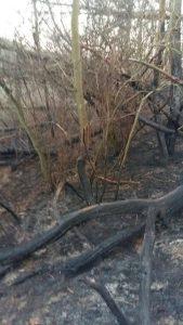 Декілька пожеж стались останнім часом й на Хмільниччині