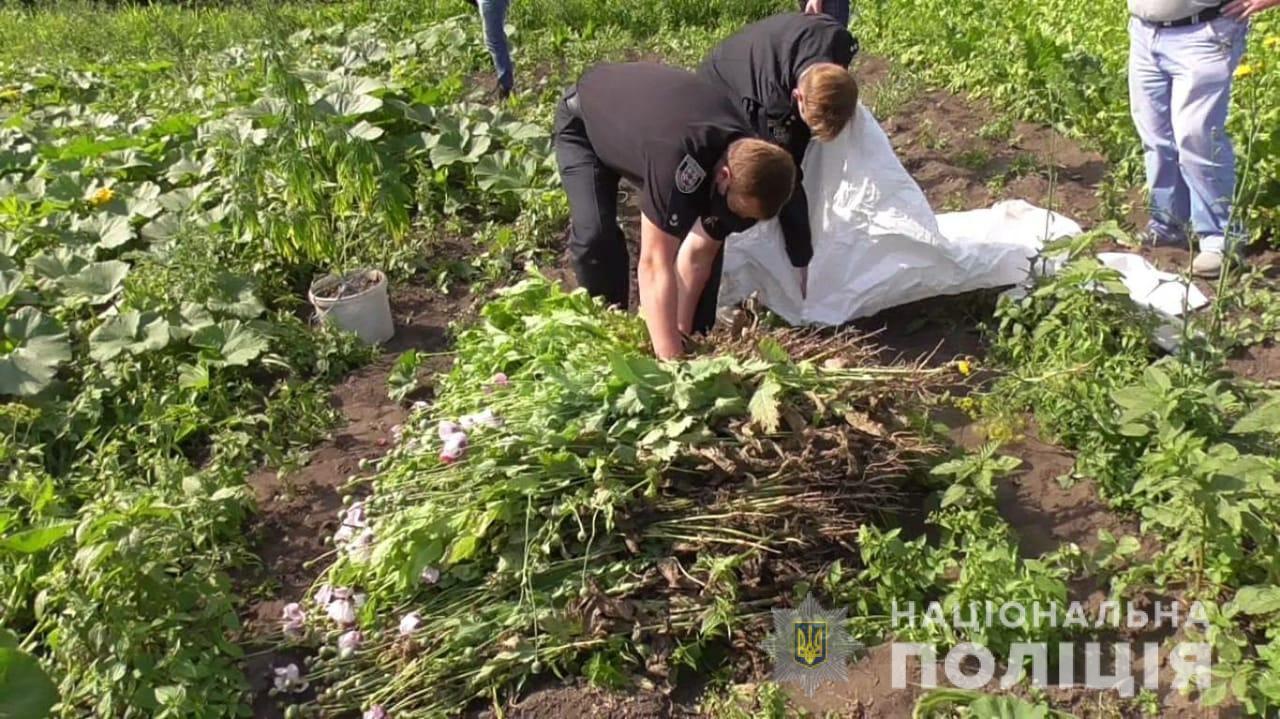 Понад 850 рослин маку виявили у мешканки Хмільницького району