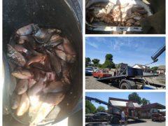 Мешканець Скаржинців незаконно торгував рибою, яку виловили по-браконьєрськи?