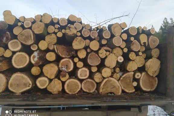 У Хмільницькому районі оштрафували службову особу та водія вантажівки за перевезення лісопродукції без відповідних документів