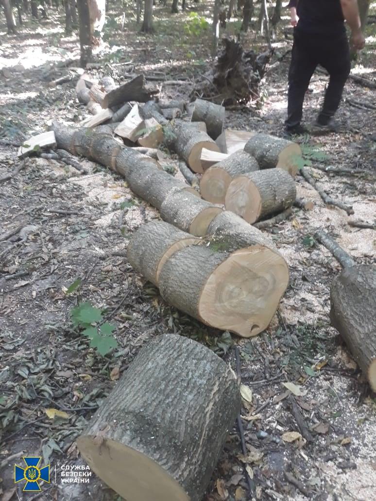 СБУ підозрює посадовця Літинського лісництва в розкраданні деревини цінних порід: зловмисник організував незаконну порубку дерев на ввіреній йому ділянці угідь ДП «Хмільницьке лісове господарство»