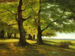 Про Думенські диво-дерева, які дали прихисток цілій родині та яке вони мали значення для жителів села