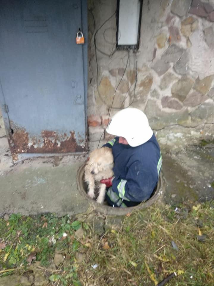Вчора у Хмільнику бійці ДСНС врятували собаку, який впав у технічний колодязь