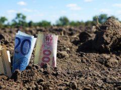Стало відомо, скільки коштує сільськогосподарська земля на Вінниччині: ціни за кордоном для порівняння