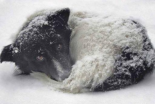 Хмільничан закликали подбати про безпритульних тварин, птахів та врятувати їх від холоду й голоду