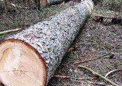 У Хмільницькому районі на чоловіка впало повалене дерево