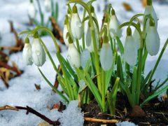 Сніг, дощі та морози: синоптики дали прогноз погоди на тиждень