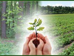 """На Вінниччині стартували акції з масової висадки дерев: Хмільниччина долучилася до """"Озеленення планети"""""""