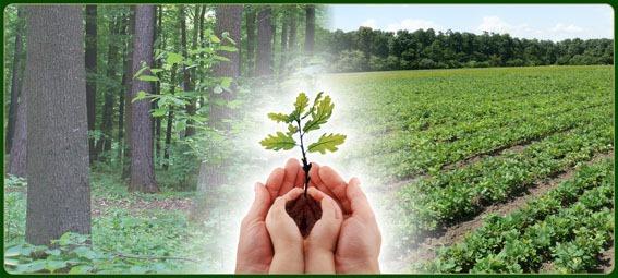 """Лісівники Вінниччини запрошують хмільничан взяти участь в акціях """"Озеленення планети"""" і """"Створюємо ліси разом"""""""