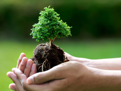 """Цього тижня хмільничан закликають приєднатися до акції """"Озеленення планети"""""""