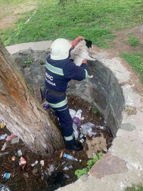 Хмільницькі рятувальники врятували собаку, який впав у яму
