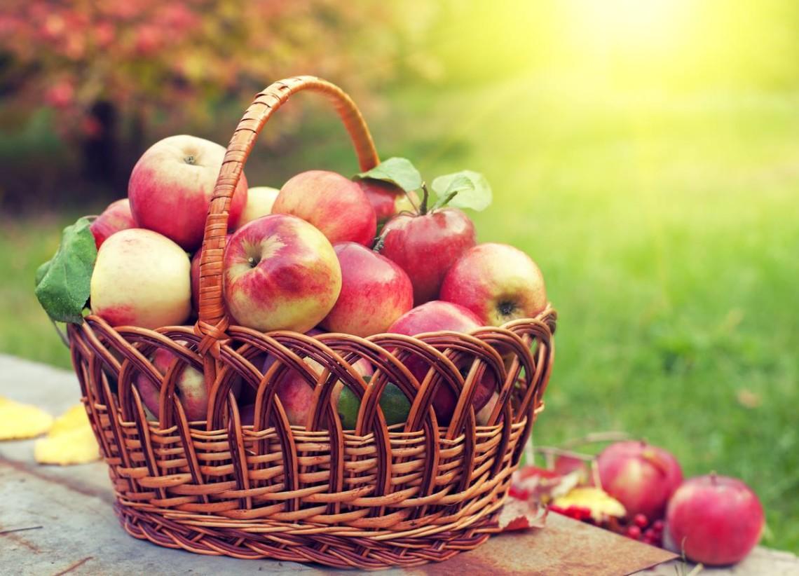 Смачні та корисні яблука: цікаві факти
