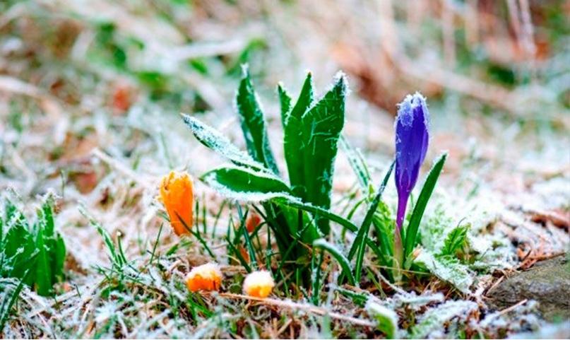 У вихідні слід одягатися тепліше: на Вінниччині очікуються заморозки