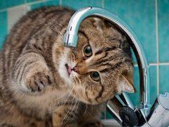 Від завтра на деяких вулицях міста будуть перебої водопостачання