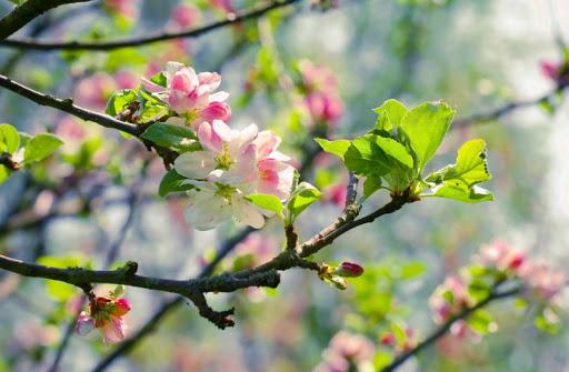 Найпопулярніші шкідники саду та методи боротьби з ними