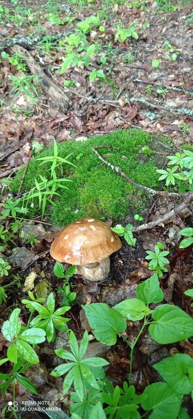 На Хмільниччині розпочався грибний сезон: як не постраждати від лісових дарів природи