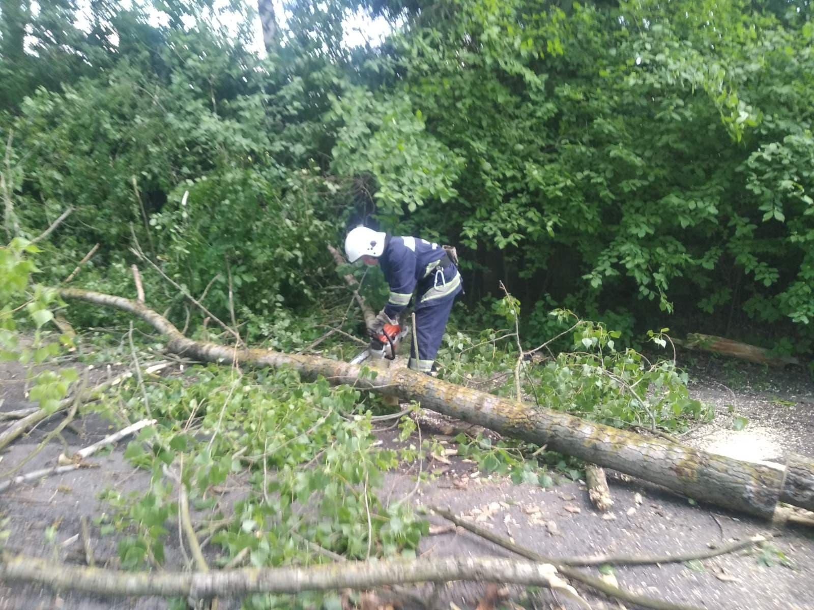 Від негоди у Хмільницькому районі на проїжджі частини доріг впали дерева