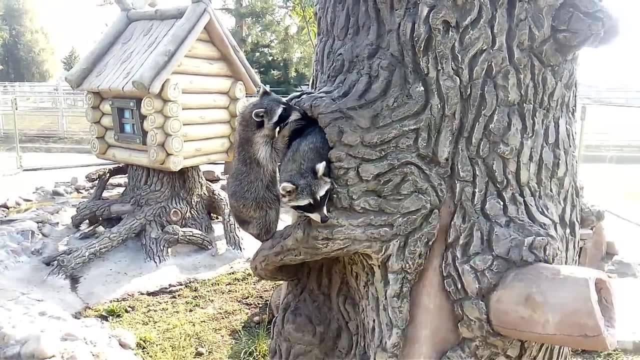 Хмільничан запрошують у Подільський зоопарк на святкування Івана Купала