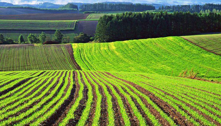 Землі Вінницької області лідирують за кількістю земельних транзакцій