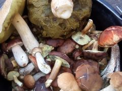 На Вінниччині почастішали випадки отруєння грибами: як не отруїтися