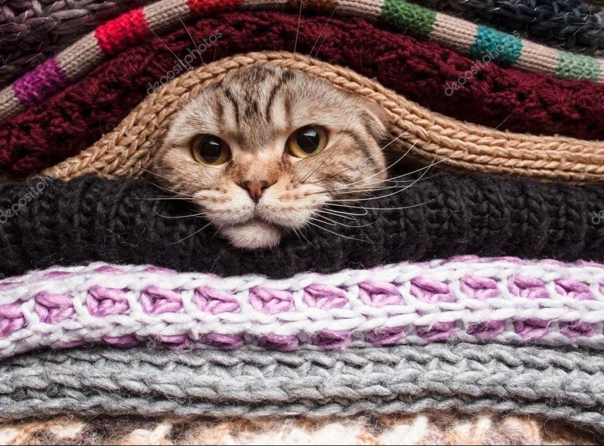 Одягайтеся тепліше! До нас ідуть заморозки