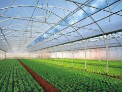 Збільшення обсягу імпорту овочів з Туреччини та банкрутство тепличного бізнесу в Україні прогнозують експерти й пояснюють прричини