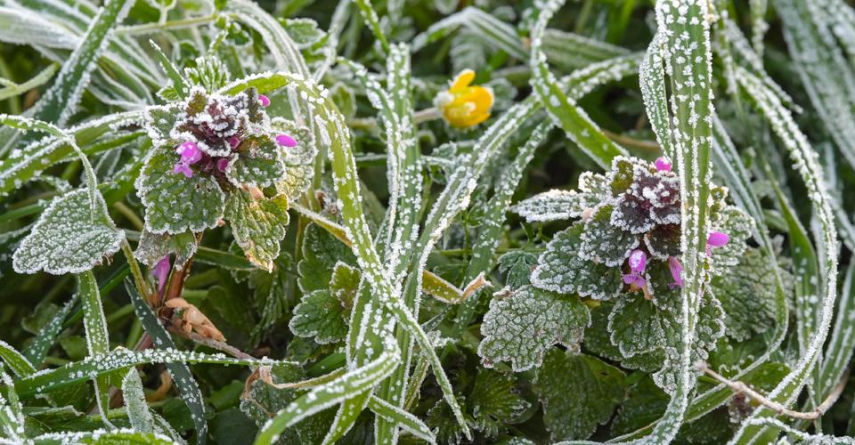 В УкрГідрометцентрі попередили про заморозки (перший рівень небезпечності)