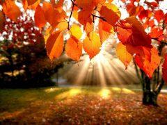 Скільки днів хмільничани відпочиватимуть у жовтні: святковий календар