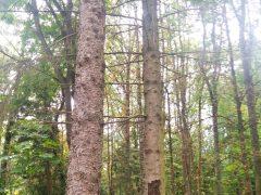 В Хмільницькому парку загальнодержавного значення зріжуть дерева