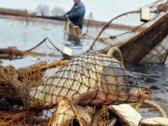В Україні у десятки разів зросли штрафи за незаконний вилов риби
