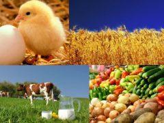 Перше місце в Україні за обсягом виробництва сільгосппродукції – у Вінницької області